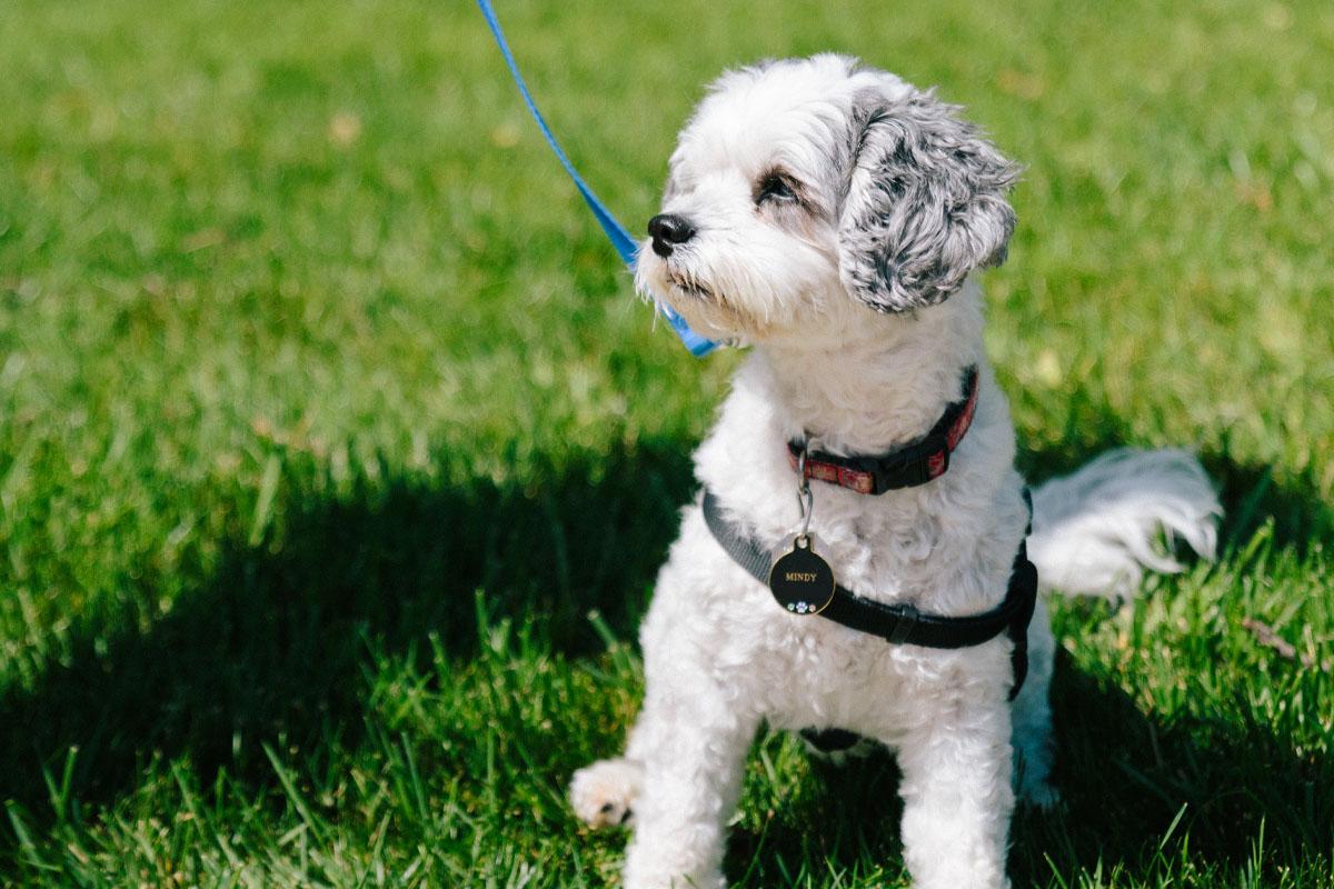 Walking dog at dog park